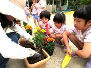 <p> 佐賀市建設部緑化推進様から花の苗を頂きました。<br />  佐賀市は公共的な施設の緑化の推進…</p>