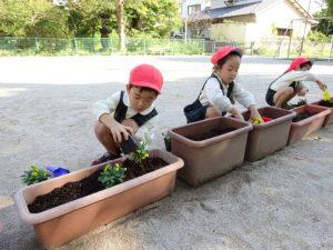 <p>苗は、指をちょきにして黒い容器を<br />ぎゅ~と押して・・・<br />夏も花の苗を植えたから、大丈夫!!</p>