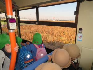 <p>お~ バルーンが見えてきました。<br />畑の作物が黄金色に輝いて、晩秋を思わせますね。</p>