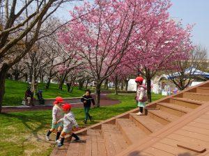 <p>新しい大きなすべり台。何度も登って滑って楽しそうでした。<br />桜の花は満開でとってもきれいですが、<br />遊びに夢中な子どもたちの目は桜より遊具にいっていました。</p>