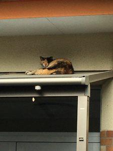 <p>「おはよう」<br />先生を朝、お迎えしてくれたのは猫ちゃんでした。<br />今日も貫禄十分な猫ちゃんです。</p>